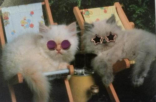 too cool cats