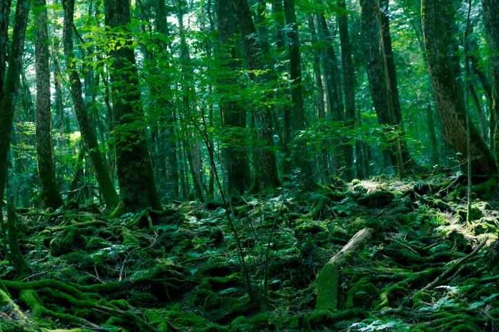 see of trees aokigahara matthew mcconaughey